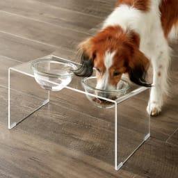 アクリル製ペットフードテーブル Mサイズ ボウルもテーブルも丸洗いができていつも清潔をキープ。