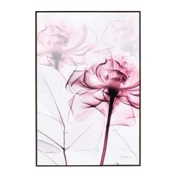 X-RAY/エックスレイ アートフレーム (ウ)ピンクローズ