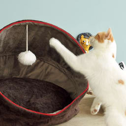 防水仕様のドームハウス 揺れるポンポンは猫ちゃんのおもちゃに。
