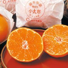愛媛西宇和川上産 「小太郎」みかん (30玉)