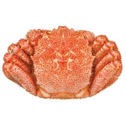 北海道産 長生き毛蟹 (約800g) 冷凍でお届けいたします。