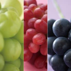 サン・フルーツ厳選 3種のまるごと種なしぶどう食べ比べ 写真