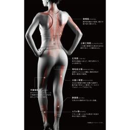 【送料無料】ルルド シェイプアップボード アプローチが期待できる筋肉(身体の後ろ側) ※イメージ