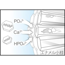 アパガードロイヤル 135g お得な2本組  (3)丈夫にする エナメル質から溶け出したミネラル成分を補給し、初期虫歯を再石灰化します。 ※イメージ図