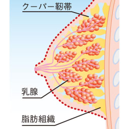 土井さんのボディサポートキャミソール 垂れないバストを守るカギは、バストを支える「クーパー靭帯」という、引っぱり持ち上げる短いゴムのような組織にあります。日頃、胸をしっかり支えないと、胸の重さや、運動によりクーパー靭帯を伸ばしたり、切ってしまい下垂の原因となるのです。