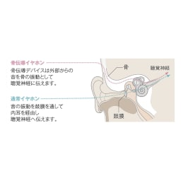 骨伝導集音器 首掛けタイプ 鼓膜に直接音を通す集音器の場合、知らぬ間に鼓膜がダメージを受けていたり年齢を重ねるごとに鼓膜へのダメージが重なり聴こえづらくなることも。耳穴を塞がない骨伝導は、鼓膜にダメージを与えにくく自然な外の音も聴こえてくるため外で身につけていても安心。
