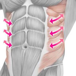 TBC スレンダーパッド(ボディ用) 本体 筋繊維の方向に合わせて、効率的な筋肉運動をサポート ※イメージ