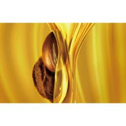 TV&MOVIE ホースアクティブエイジクレンジング&ソープ  200ml 希少価値の高いオーガニック・アルガンオイルを配合 ※イメージ
