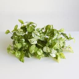 CT触媒加工シェルフプランツ [人工観葉植物・インテリアグリーン] マーブルポトス