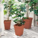 人工観葉植物シェフレラ 高さ90cm 写真
