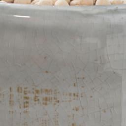 インテリアグリーン(エコストーン入り) ストレリチアリーフ 素地の柄と釉薬の光沢が美しい陶器鉢。趣のあるアンティーク調仕上げ。