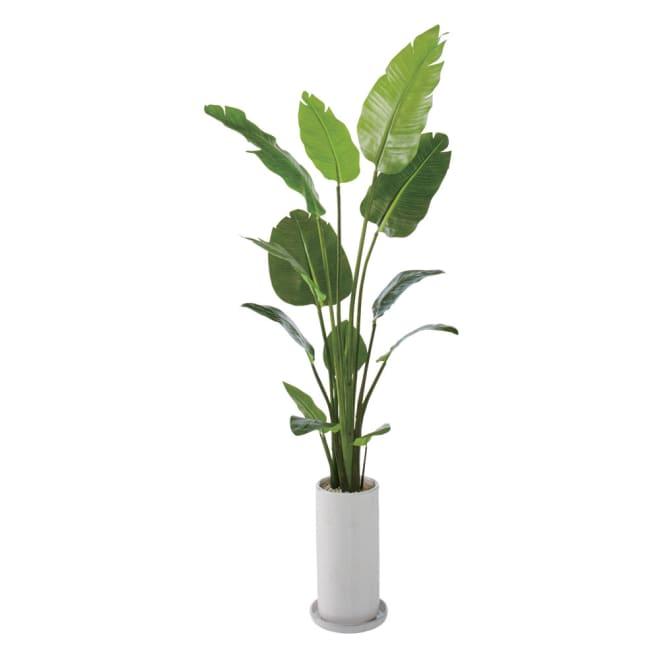 インテリアグリーン(エコストーン入り) ストレリチアリーフ ホワイト
