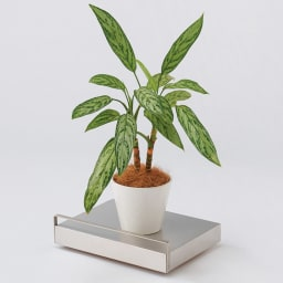 キャスター付き家電収納カート Lサイズ 移動の面倒な大きな観葉植物ものせて運べばスイスイ。 ※画像はSサイズです。