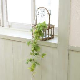 ハンギンググリーン2個セット シュガーバインXテッセンソウ ボトルに入れたり棚に沿わせたり。ちょっとグリーンを飾るだけでお部屋が爽やかに。