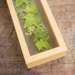 インテリアフレーム プリザーブドグリーン アイビーxアジアンタム 爽やかなグリーン2種が同時に楽しめます