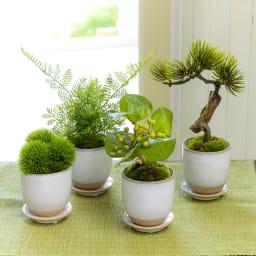 CUPBON 白茶小鉢 マリモ 白茶小鉢シリーズ