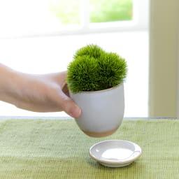 CUPBON 白茶小鉢 シノブ 受け皿は外せます ※商品はマリモとなります
