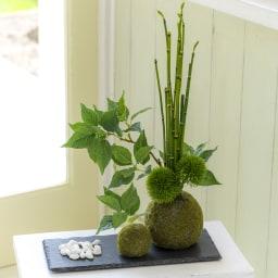 【CUPBON/カップボン】寄植え苔玉(黒岩皿) 桜の葉 ご自身でセットいただくため配置はお好みで買えられます