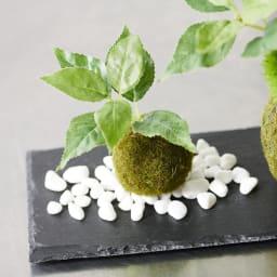【CUPBON/カップボン】寄植え苔玉(黒岩皿) 桜の葉 リアルながらもフェイクグリーンのためお手入れ要らず