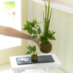 【CUPBON/カップボン】寄植え苔玉(黒岩皿) 桜の葉 黒岩皿にそれぞれの苔玉をお好みの場所に置いてください