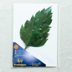 プレミアム榊(丹波産高級椿葉使用) Mサイズ椿葉増量版1束 お届け時の状態