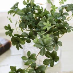 シュガーバイン ガラストラぺゾイド グリーンの濃淡と花のような葉の形が可愛らしいシュガーバイン