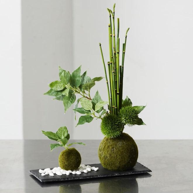 【CUPBON/カップボン】寄植え苔玉(黒岩皿) 桜の葉 配置例(お客様ご自身でセットアップして頂く形となります)