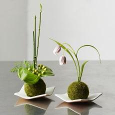 CUPBONミニ苔玉セット ヨウラクユリ&トクサxサンキライ