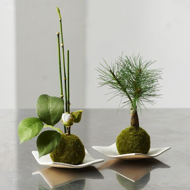 CUPBONミニ苔玉セット 椿つぼみxトクサ&松三本 松三本(右)と椿つぼみXトクサのセット
