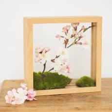 インテリアフレームフラワー 桜