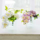 胡蝶蘭のマジックウォーターアレンジメント 写真