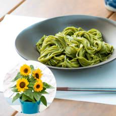 【父の日ギフト】浅草むぎとろ茶そば&ひまわり鉢植えセット