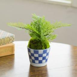 【CUPBON】 しのぶ 柔らかな葉色の「しのぶ」。水やり不要で長く楽しめるアーティフィシャルグリーンの盆栽です。