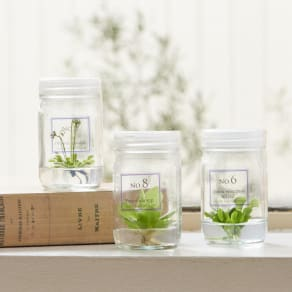 選べる2つ お手入れ要らずの 食虫植物ラボ  - PLANT LABORATORY - 写真