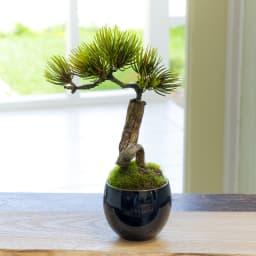 CUPBON 美濃焼藍色 松吹き流し アーティフィシャルグリーンのミニ盆栽