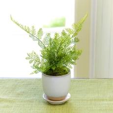 CUPBON 白茶小鉢 シノブ