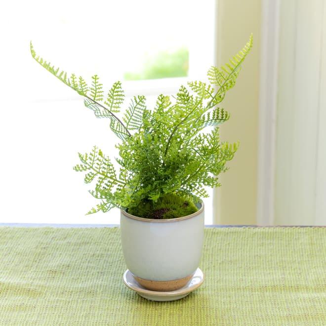 CUPBON 白茶小鉢 シノブ 新緑のような爽やかな色合いのグリーンのシノブ