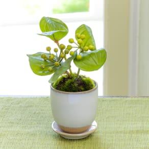 CUPBON 白茶小鉢 サンキライ 写真
