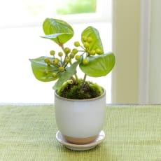 CUPBON 白茶小鉢 サンキライ