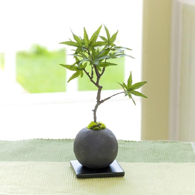 CUPBON 檜炭ボール モミジ 明るいグリーンのモミジを檜炭ボールにアレンジ
