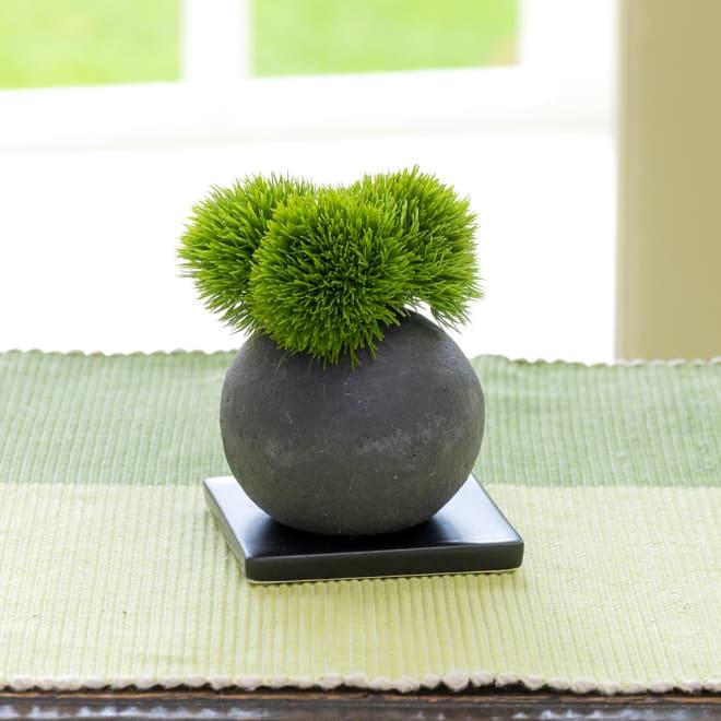 CUPBON 檜炭ボール マリモ モダンな「テマリソウ(通称:マリモ)」のフェイク盆栽