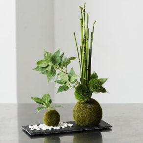 【CUPBON/カップボン】寄植え苔玉(黒岩皿) 桜の葉 写真