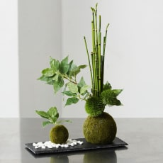 【CUPBON/カップボン】寄植え苔玉(黒岩皿) 桜の葉