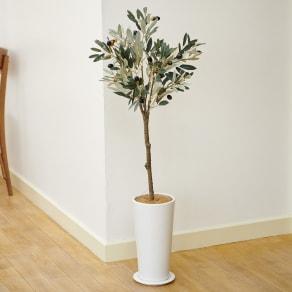 オリーブの木 ポット 写真