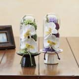 ガラスドームの供花 コチョウラン 写真