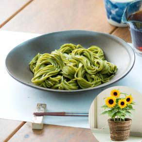 【父の日ギフト】浅草むぎとろ茶そば&ひまわり鉢植えセット 写真