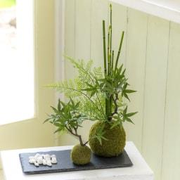【CUPBON/カップボン】寄植え苔玉(黒岩皿) モミジ トクサ、モミジ、シダを寄せ植えた苔玉とミニ苔玉を並べて飾るセットです