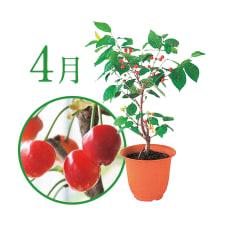 【毎月届くお花の頒布会】フルーツツリーコース(2019年4月~2019年9月)