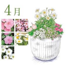 【毎月届くお花の頒布会】らくらく華やかガーデンコース(2019年4月~2019年9月)