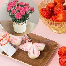【母の日ギフト】恋するいちご&カーネーション鉢植えセット